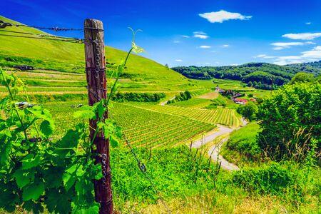 ブドウ畑との距離の古い絵のような村で美しい夏の田舎の風景します。ドイツの黒い森