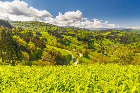 夏の緑山渓谷の美しい風景。丘陵田園地帯、山林、民家風光明媚な歴史的な村。ドイツの黒い森。カラフルな旅行の背景。