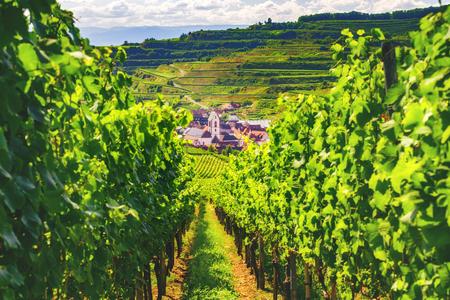 夏の日のドイツの美しい山渓谷のぶどう農園。古い歴史的な村と美しい雲と風光明媚な田園風景。旅行先。