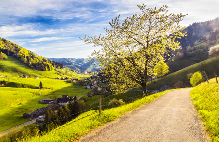 pastoral scenery: Scenic panoramic landscape. Picturesque mountain valley in spring. Historic village in Germany, Black Forest with blossoming trees and traditional houses. Colourful travel background.