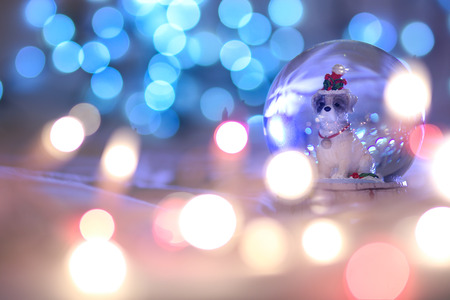 Snow globe Christmas dog, Chinese animal zodiac. 2018 is the year of the Dog,  zodiac animal, bokeh, concept. Chinese lunar calendar Stockfoto