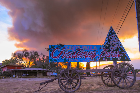 Christmas trees sign in front of California Wildfire Smoke, Ventura county, December 7th 2017. Sky burned during wildfire natural disaster