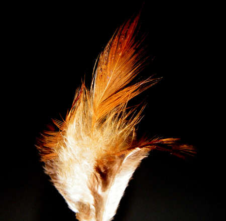 Feather Stock Photo - 5286417