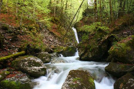 Rocky Mountain Stream photo