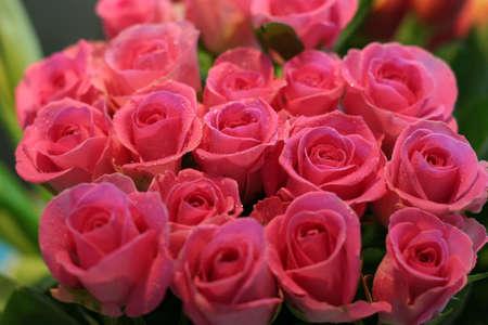 Roses #6 Stock Photo - 469923