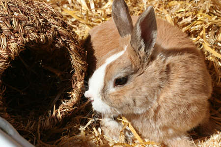 Hare Stock Photo - 508292