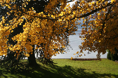 yelow: autumn yelow parc Stock Photo