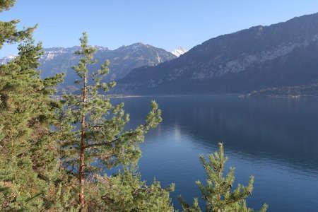 natur: Natur lake Thun Stock Photo