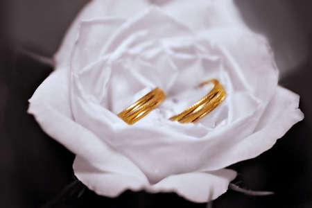 Dos anillos de boda en Rosa Blanca  Foto de archivo - 659136