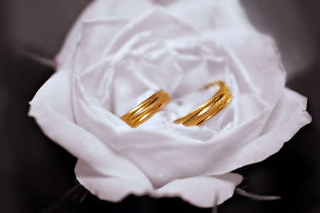 Two wedding rings in White Rose photo