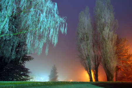 Winter fog photo
