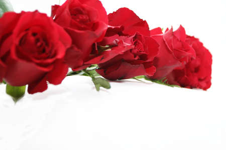 garland of deep red roses Stock Photo - 697331
