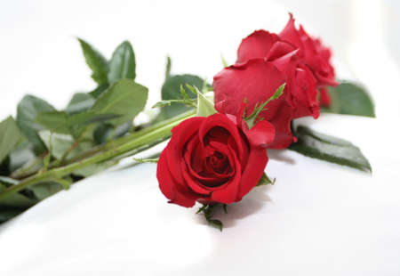 garland of deep red roses Stock Photo - 697338