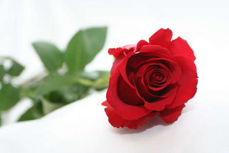deep red rose Stock Photo - 697347