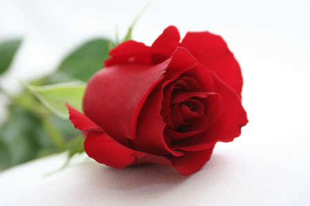 deep red rose Stock Photo - 697348
