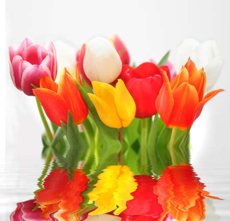 Three-Color Tulips photo