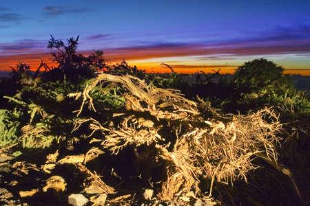 natur: Selvatica di natur Canarie tramonto