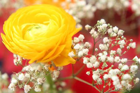 Happy flowers Stock Photo