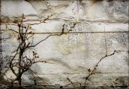middleages: Old wall background