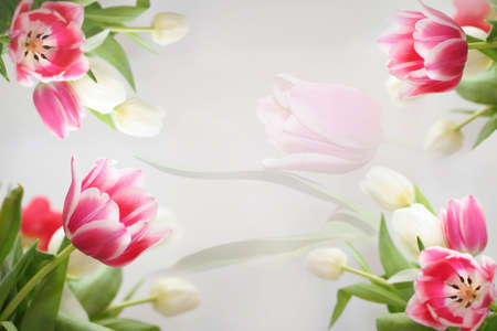 Spring flower tulips beautiful colorful flowers making border framed isolated love letter horizontal background Stock Photo