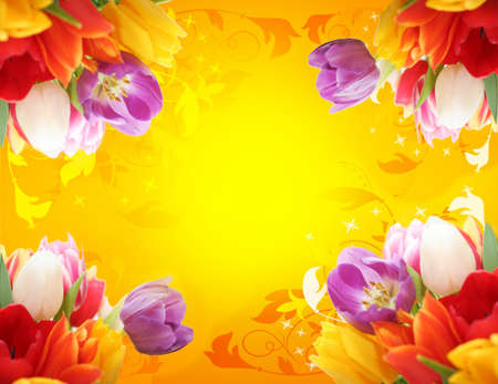 edge design: Spring flower tulips beautifulcolorful flowers making border framed isolated love letter horizontal background