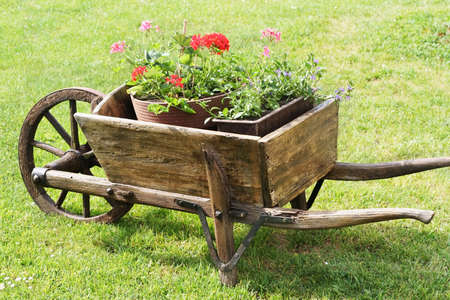 Flowers in the wheelbarrow