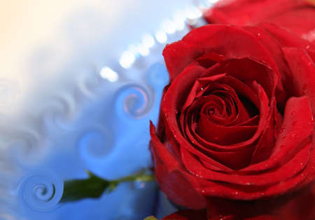 red rose Stock Photo - 4237167