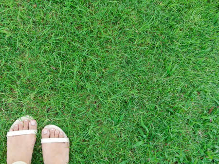 cream color: Foot wear cream color shoes over green grass