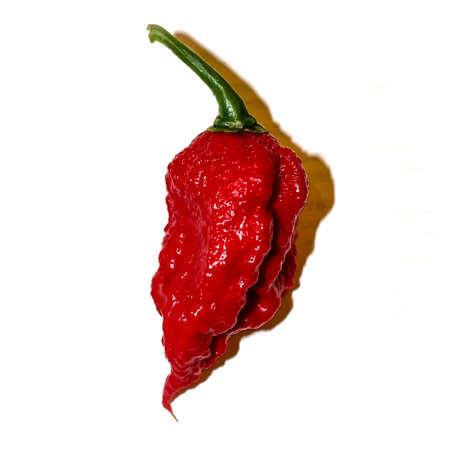 Red Carolina Reaper chili peppers