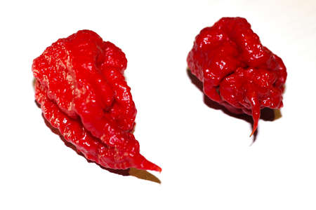 Red Carolina Reaper chili peppers