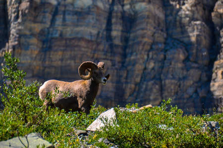 tats: WIldlife as seen in Glacier National Park, Montana, USA. Stock Photo