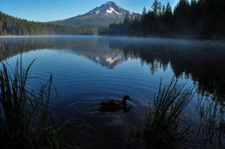 trillium lake: Trillium Lake early morning with Mount Hood, Oregon, USA.