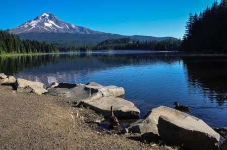 excitacion: Trillium Lake ma�ana temprano con el Monte Hood, Oregon, EE.UU.. Foto de archivo