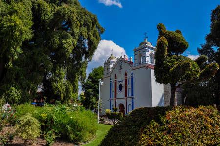 arbol: �rbol grande en el mundo, Arbol del Tule, M�xico. Foto de archivo