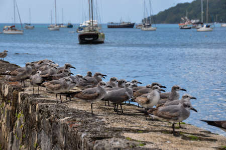 What are those birds looking at?! Portobelo, Panama