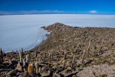 incahuasi: Isla Incahuasi (Pescadores), Salar de Uyuni, Bolivia. Stock Photo