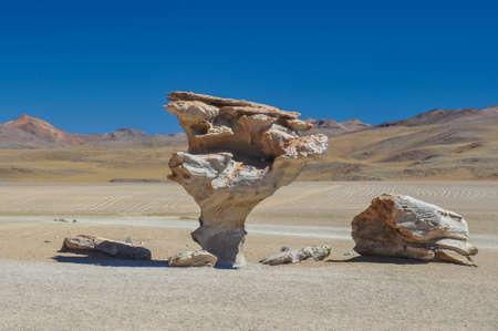 arbol: Piedra del Arbol, Sur L�pez, Sur de Bolivia. Foto de archivo