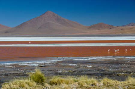 lipez: Laguna Colorada, Sur Lipez, South Bolivia.