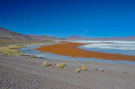 lipez: Laguna Colorada, Sur Lipez, South Bolivia.