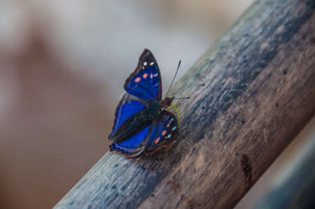encountered: Spectacular butterfly encountered in Iguazu falls, Argentina.