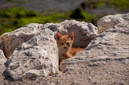 al: Cute Kitty hiding, Al Khobar, Saudi Arabia.