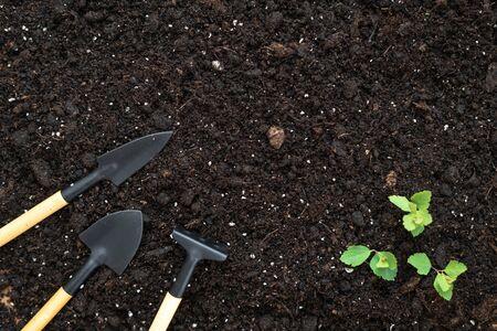 Widok z góry na zestaw narzędzi ogrodniczych, grabie, łopatę i małe zielone rośliny liściaste na czarnej ziemi z miejscem na kopię
