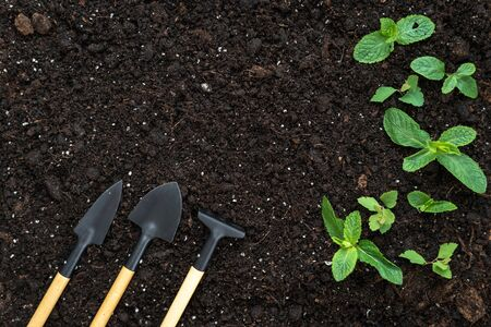 Top view of set gardening tools, rake, shovel and small green leafy plants on black soil ground with copy space 스톡 콘텐츠