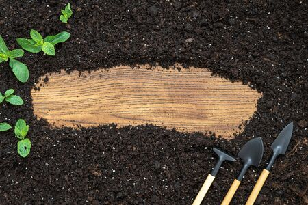 Flat lay of set gardening tools, rake, shovel and small green leafy plants on black soil ground with copy space on wooden background