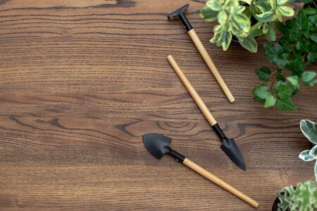 Flat lay view of set gardening tools with plants in flowerpoots on wooden table with copy space
