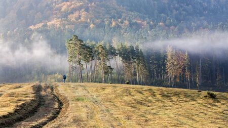 Traveller man with backpack walking in autumn mountain with fog, pine trees and forest on hills 写真素材 - 136809434