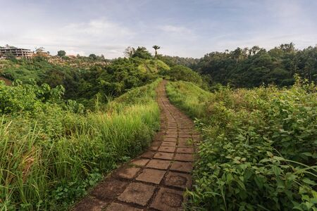 Stone footpath in green and fresh colorful meadows on the hillside valley. Landscape view of Campuhan Ridge Walk, Ubud, Bali, Indonesia