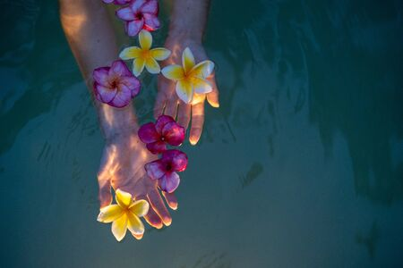 Cropped view of woman hands holding fresh and colorful Plumeria flower in water, showing beauty spa for skin and body in bath with natural plants against copy space 写真素材