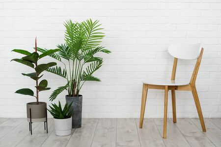 New contemporary living room in house with modern interior, wooden chair, green houseplant in flowerpot on laminate floor against white brick wall with copy space