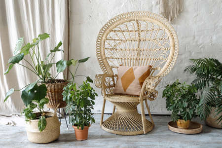 Many green houseplants in flowerpots standing near wicker armchair with cushions at comfortable living room. Concept of interior design in bohemian style 版權商用圖片